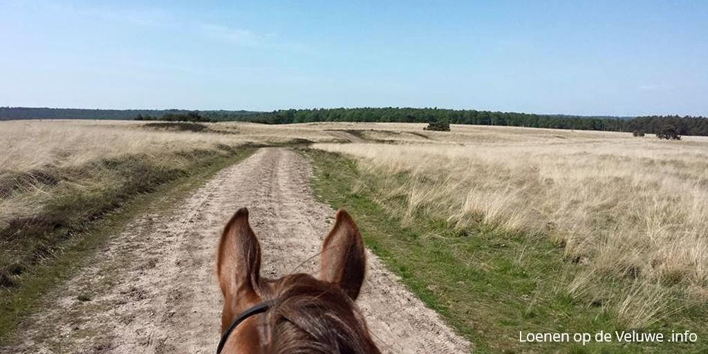 paardrijden loenen