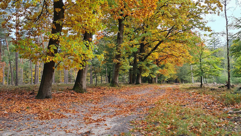 bos loenen herfst
