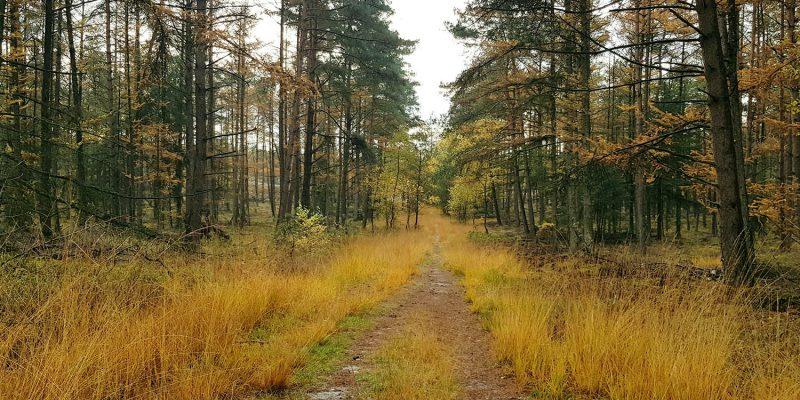 loenense bossen